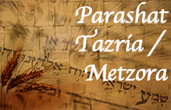 27-Tazria-Metzora